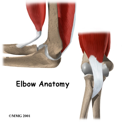 Elbow_anatomy_intro01