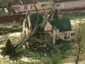 Tree-on-house-denver